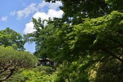 旧古河庭園 緑の輪