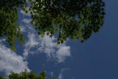 旧古河庭園 空を見上げて