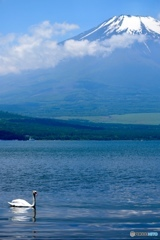 富士山と白鳥と白鳥ボート