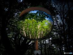 カーブミラーと樹林