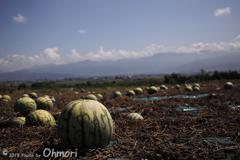 安曇野夏の水瓜