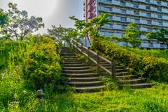 緑でむした階段