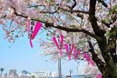 隅田川の桜まつりのちょうちん