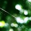 クモの巣と玉ボケ2