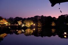 ライトアップの日本庭園