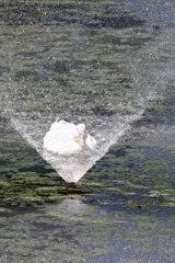 噴水の中のアヒルさん♪