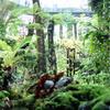 熱帯の植物園