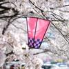 桜ぼんぼり