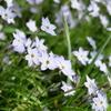 茂みの中の花たち