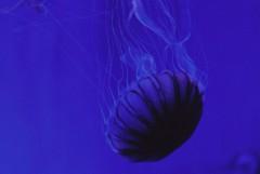 青く、黒く染めてゆく