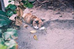 猫、ひっそり寝