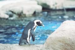 ペンギン観察