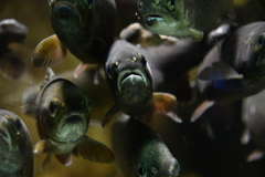 さいたま水族館2