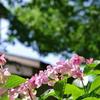 藤森神社3