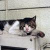 猫18・野良の勲章
