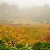 台風前の紅葉