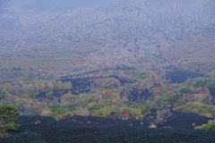 岩手山焼走り溶岩流1