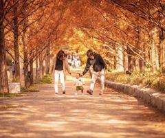 秋の雰囲気