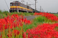 彼岸花とセメント列車