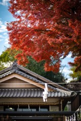塩竈神社の秋