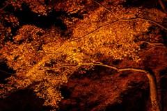 香嵐渓の秋燃ゆ