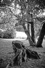 牧野ケ池緑地