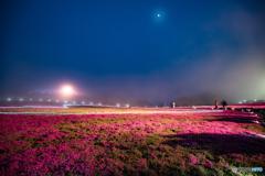 茶臼山高原芝桜