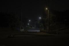 流木と街灯