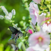 蝶は花がお似合い
