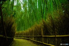 竹好きの道