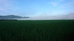 「Misty  morning」