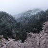矢祭山、満開の桜と雪景色
