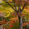秋の月見橋