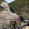 桜と大だるま岩と水郡線