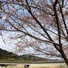 咲きだした桜と東橋