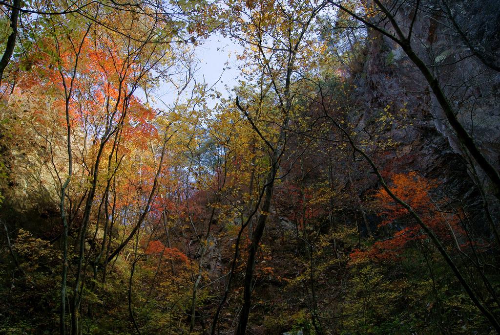 夢想滝遊歩道から仰ぎ見る紅葉