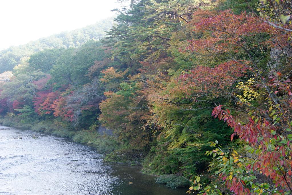 久慈川沿いの紅葉