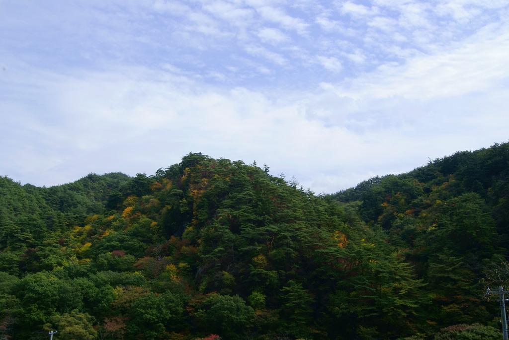 黄葉の桧山と鱗雲の秋空