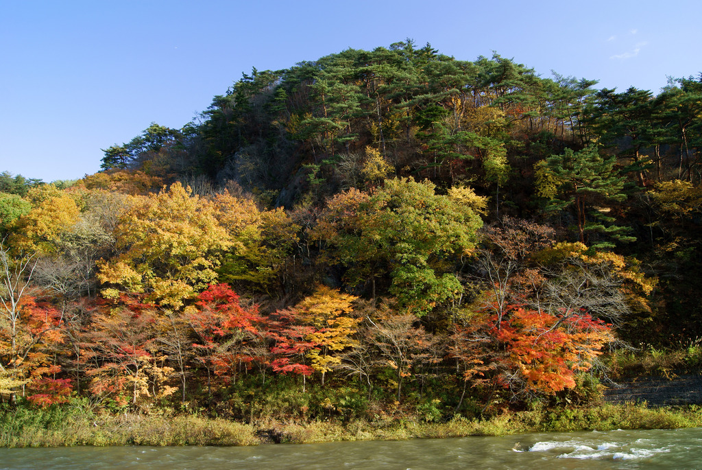 久慈川対岸の紅葉