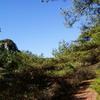 探鳥路と松と日月岩