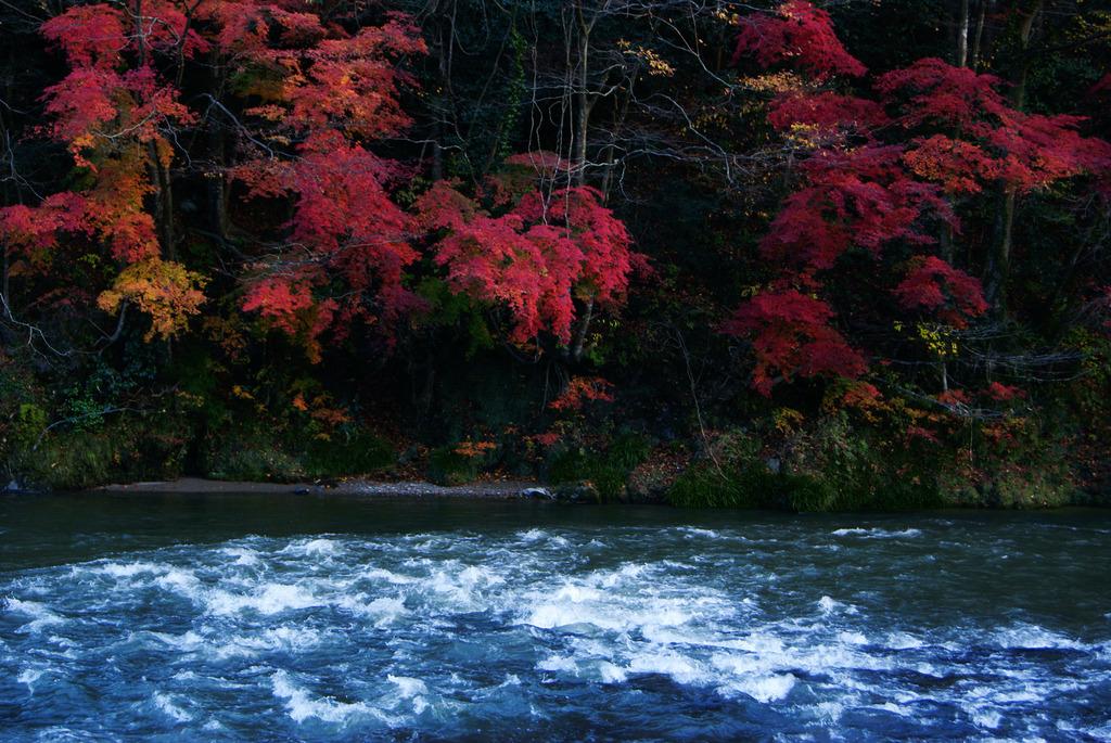久慈川の流れと紅葉