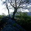 逆光の岩と松