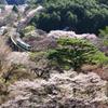 桜の矢祭山を走る水郡線