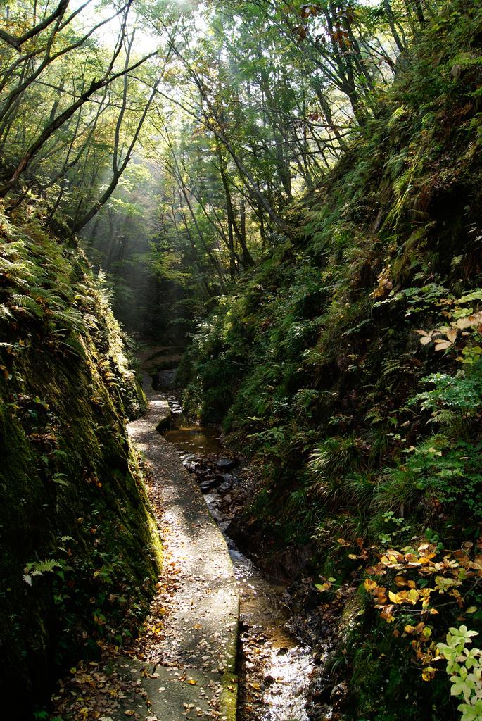 初秋の夢想滝遊歩道