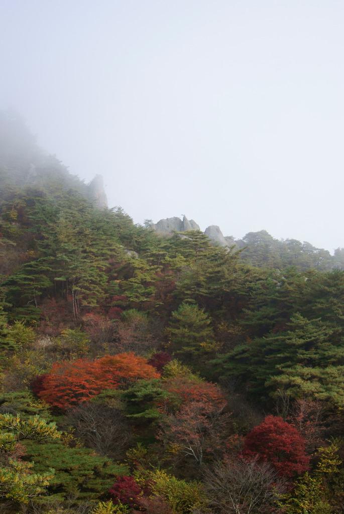 朝霧に包まれる秋の屏風岩