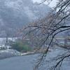 桜と久慈川と雪の小だるま岩