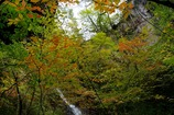 秋の夢想滝渓谷