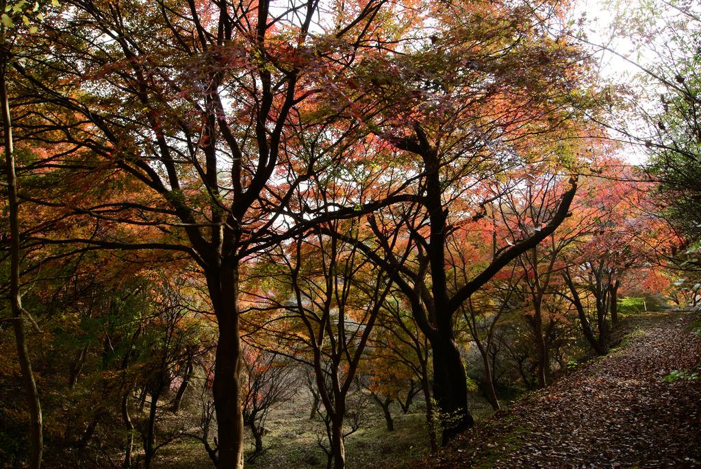 小萩の沢の紅葉