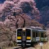 水郡線と乙女ヶ越の桜