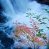 紅葉と青葉と白き流れ